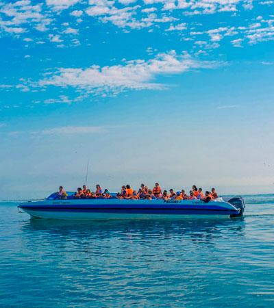 Tour Paracas